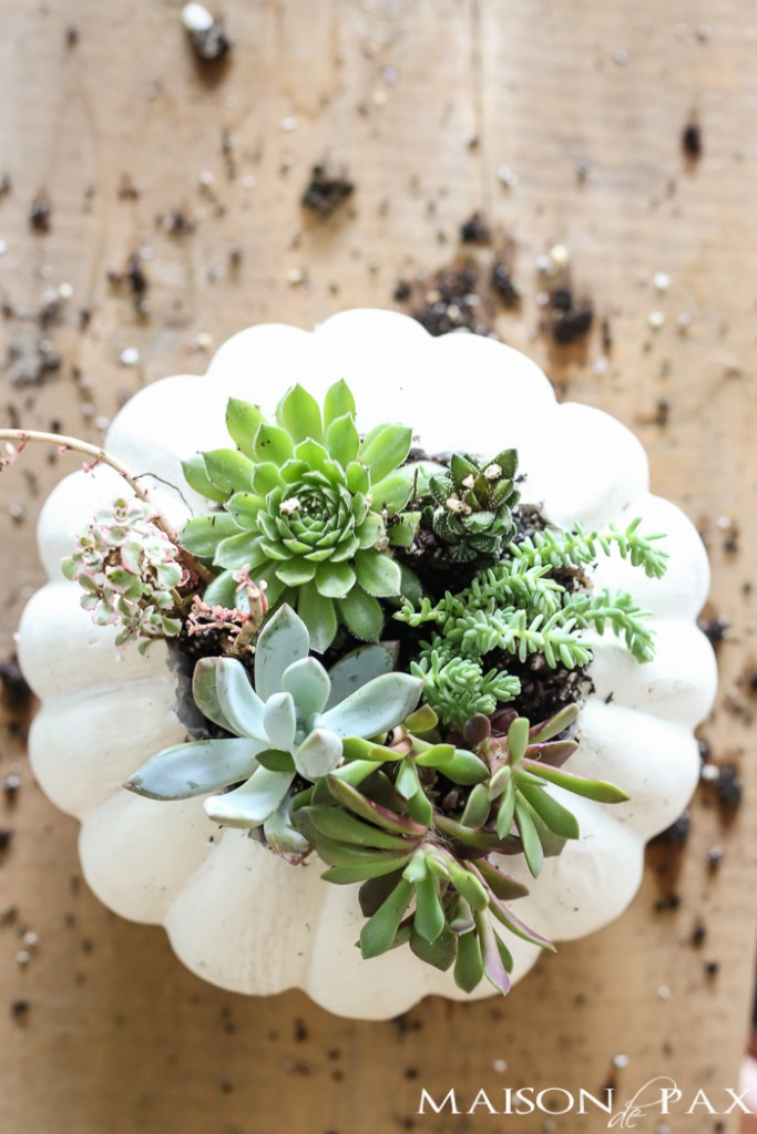 fall-succulent-planter-18